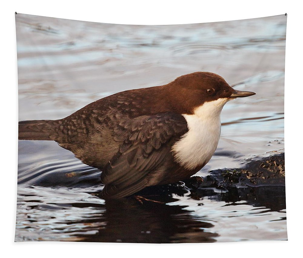 Dipper Tapestry featuring the photograph The White-throated Dipper by Jouko Lehto