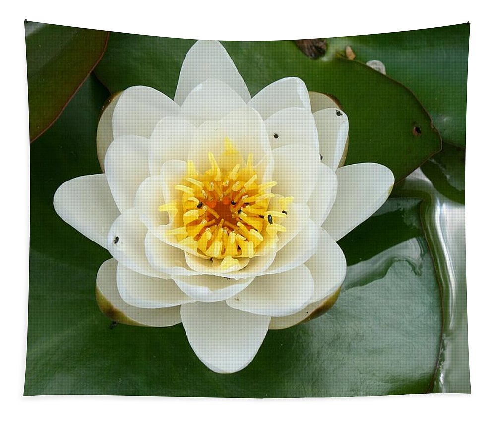 Waterlily Tapestry featuring the photograph White Waterlily by Christiane Schulze Art And Photography