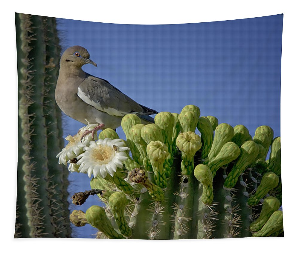 White Winged Dove Tapestry featuring the photograph White-winged Dove Atop A Saguaro by Saija Lehtonen
