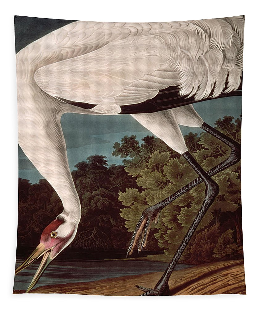 Bird Tapestry featuring the painting Whooping Crane by John James Audubon