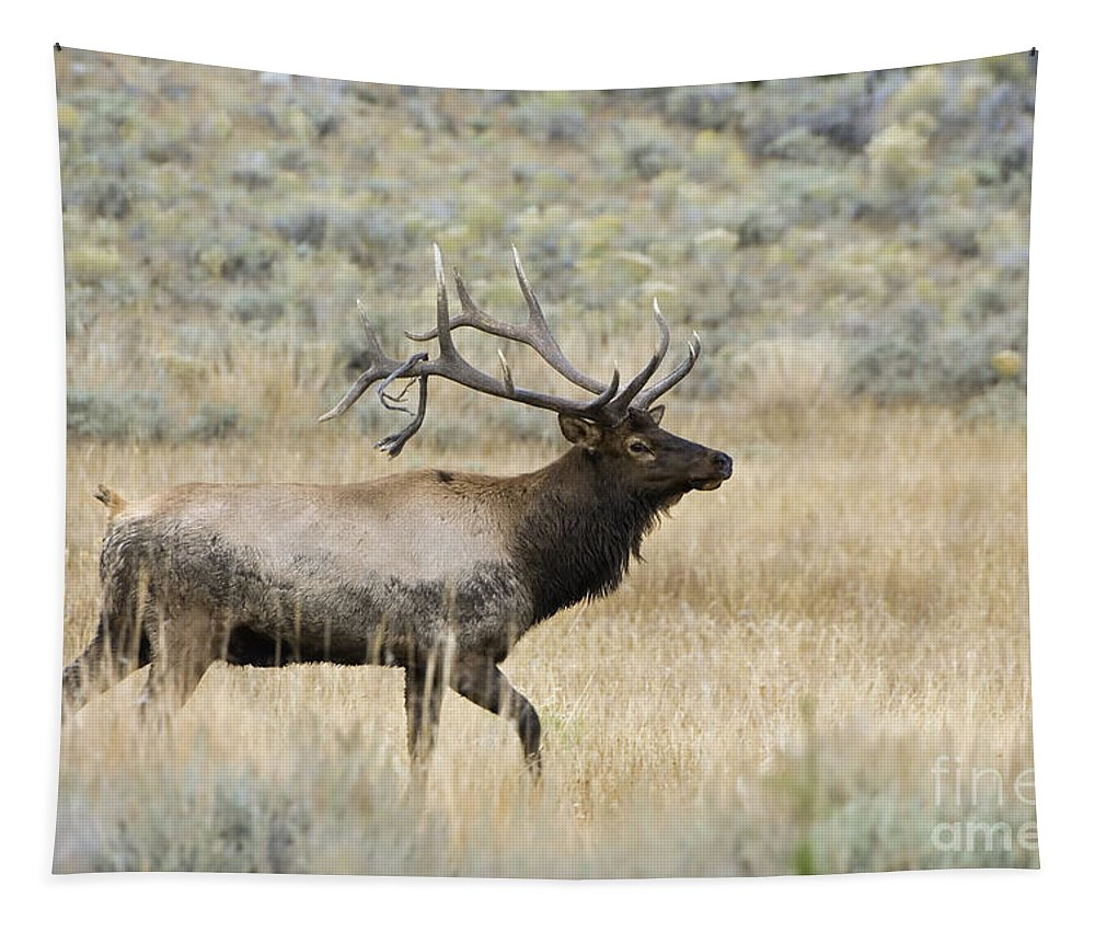 Elk Tapestry featuring the photograph 2nd To None by Wildlife Fine Art