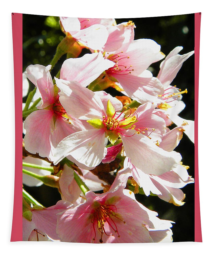 Cherry Blossoms Tapestry featuring the photograph Cherry Blossoms by Sandi OReilly
