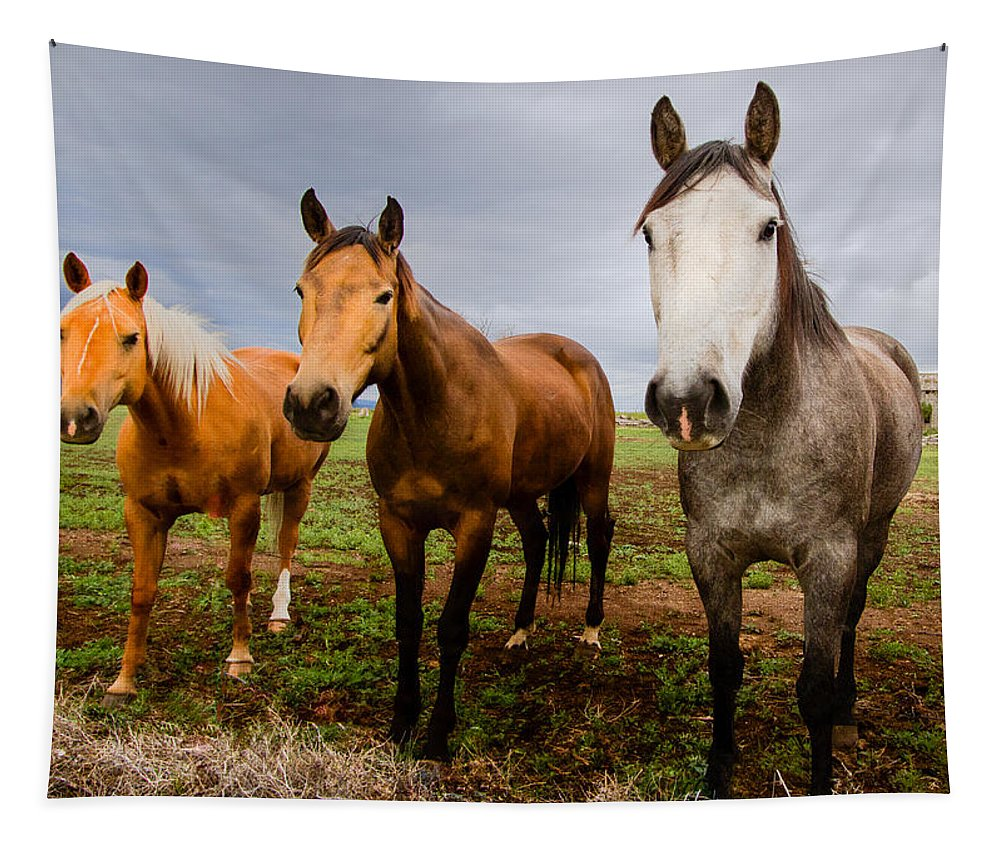 Mammal Tapestry featuring the photograph 3 Horses by Jean Noren