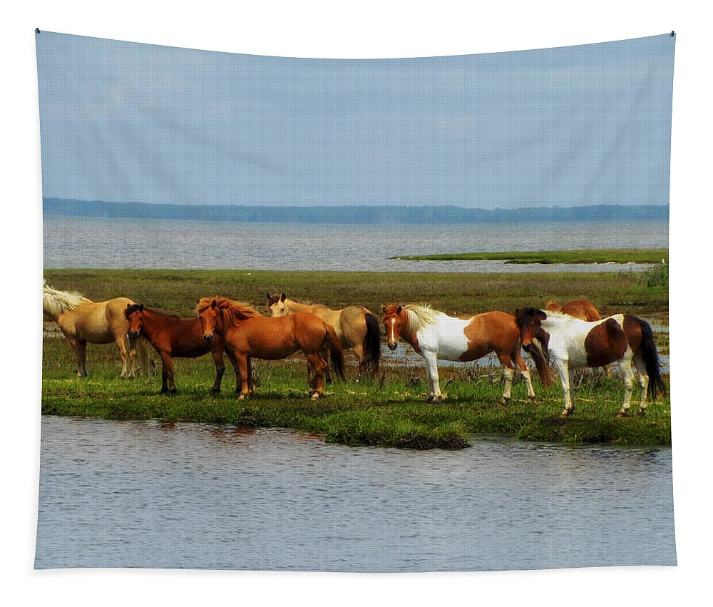 Wild Tapestry featuring the photograph Wild Horses Of Assateague Island by Mountain Dreams