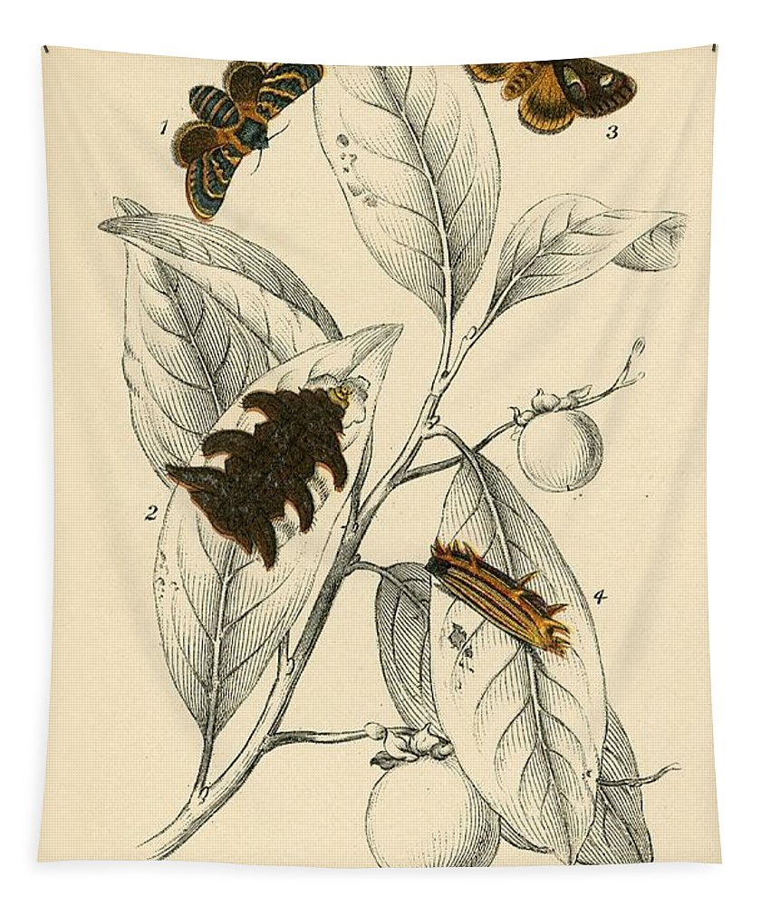 Insect Tapestry featuring the painting Butterflies by English School