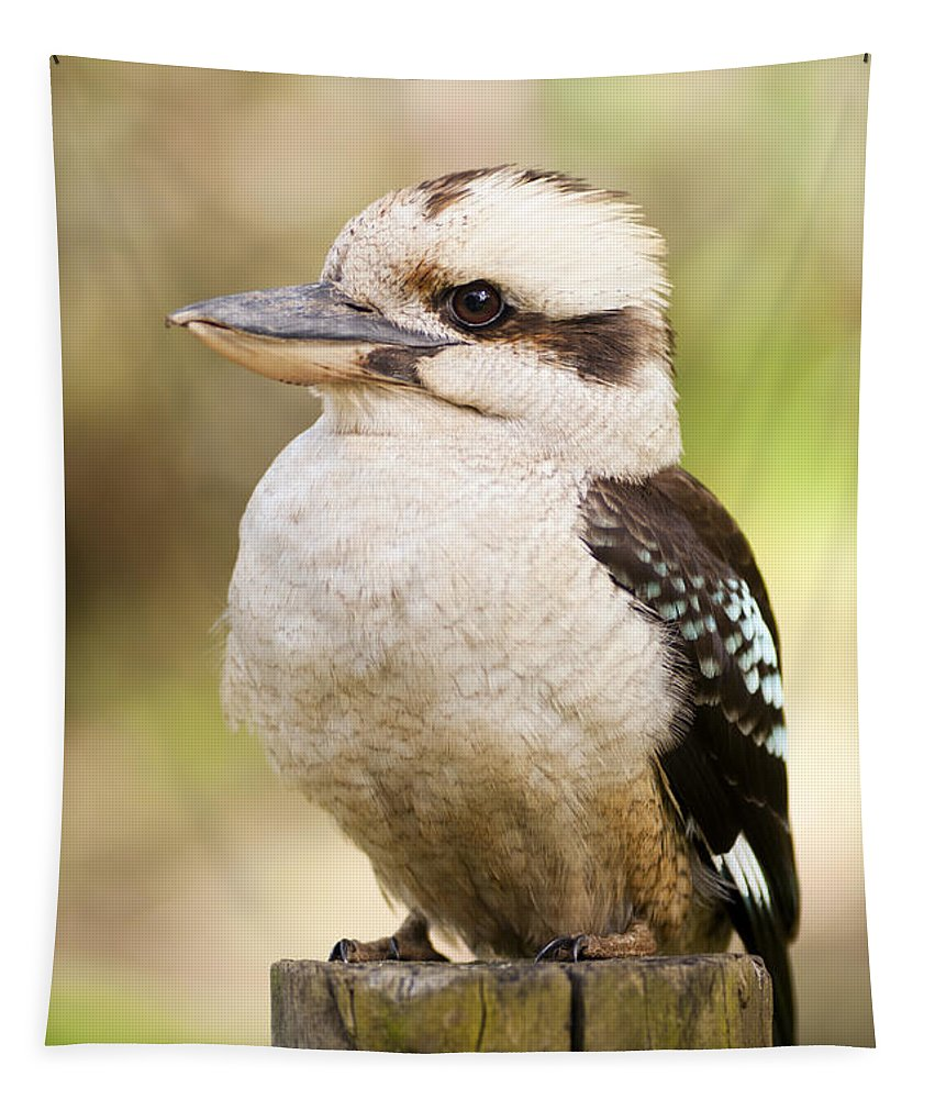 Australia Tapestry featuring the photograph Kookaburra 4 by Tim Hester