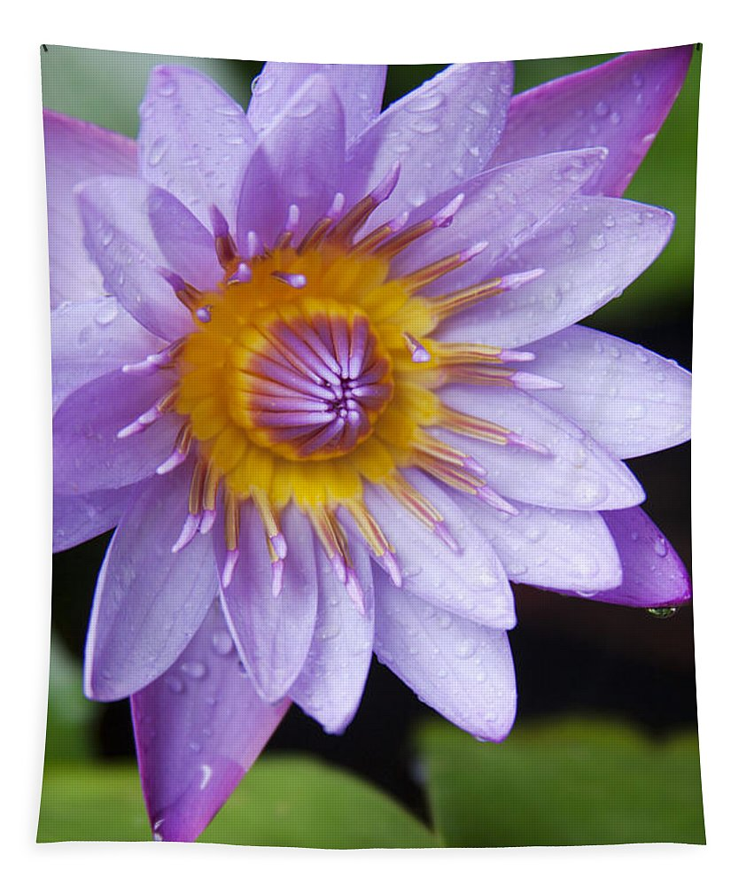 Aloha Tapestry featuring the photograph The Lotus Flower by Sharon Mau