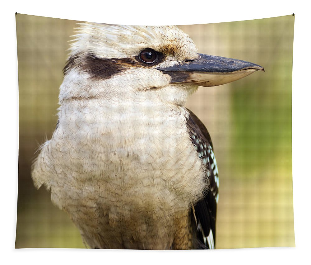 Australia Tapestry featuring the photograph Kookaburra by Tim Hester