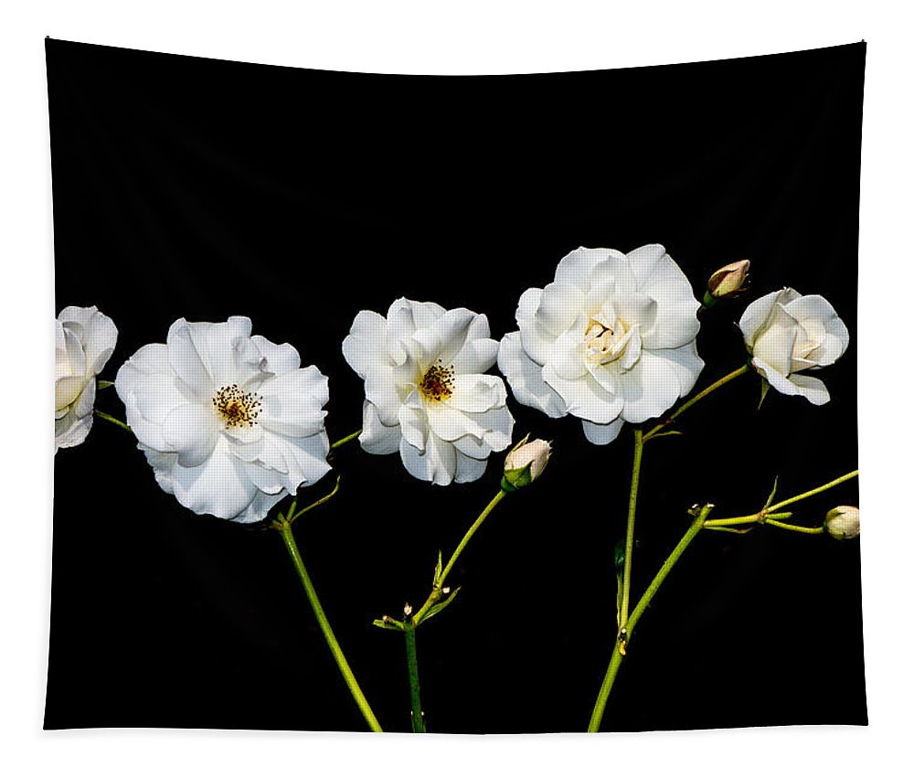 Roses Tapestry featuring the photograph 5 White Roses On Black by Matthias Hauser