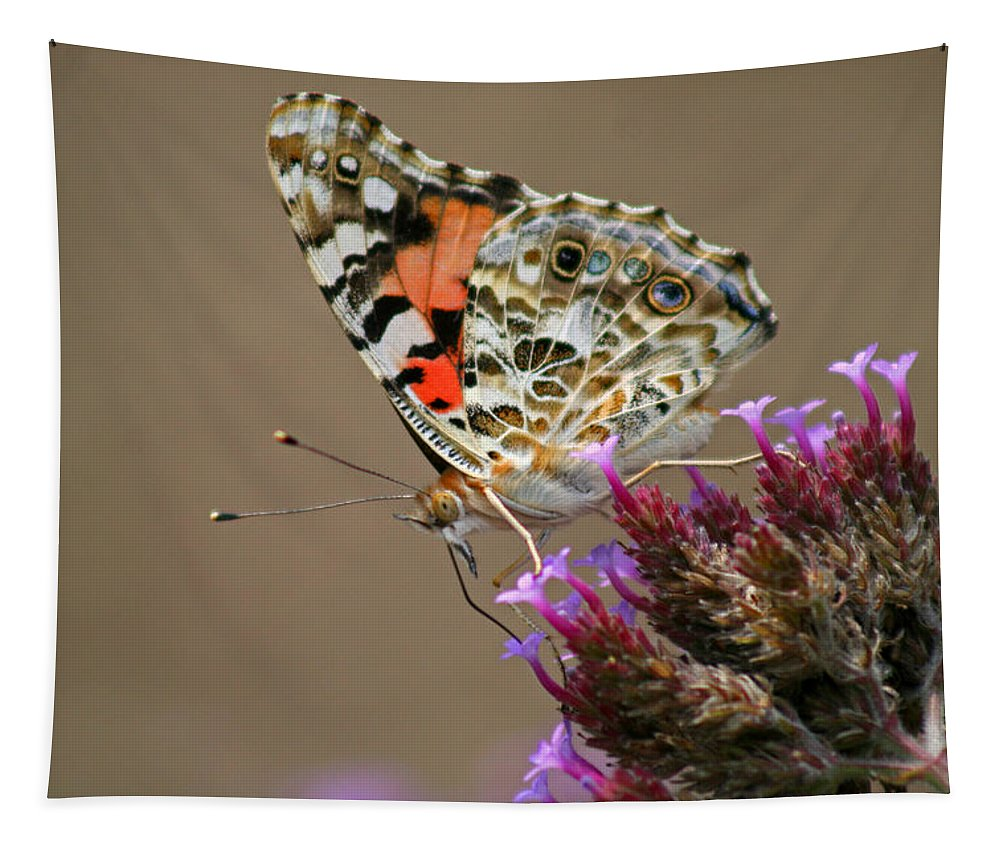 Tapestry featuring the photograph American Painted Lady Butterfly by Karen Adams