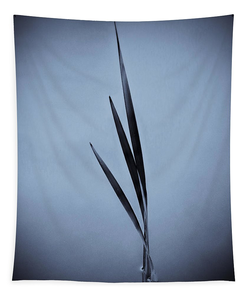 Blue Tapestry featuring the photograph Water Reed Art by David Pyatt