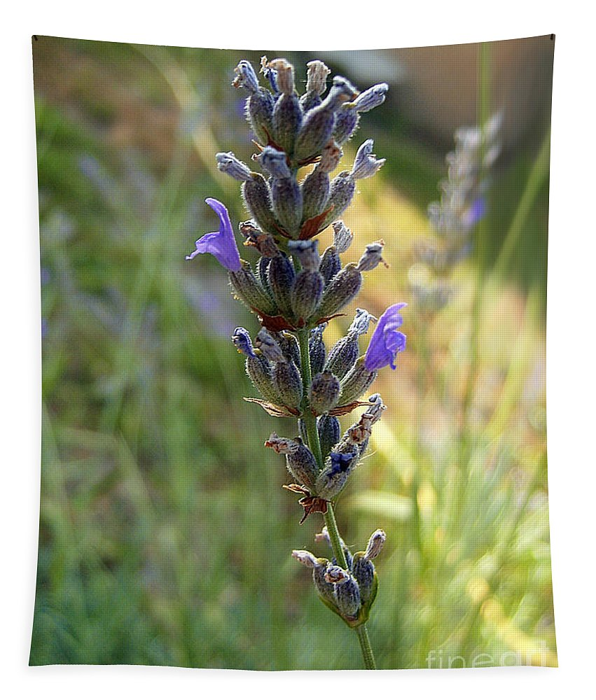 Lavender Tapestry featuring the photograph Lavender 6 by Nina Ficur Feenan