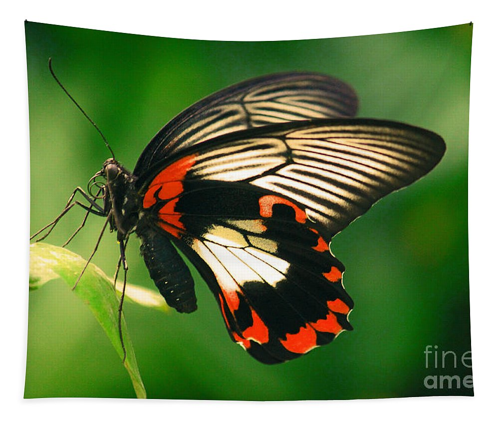 Butterfly Tapestry featuring the photograph A Beauty by Davids Digits