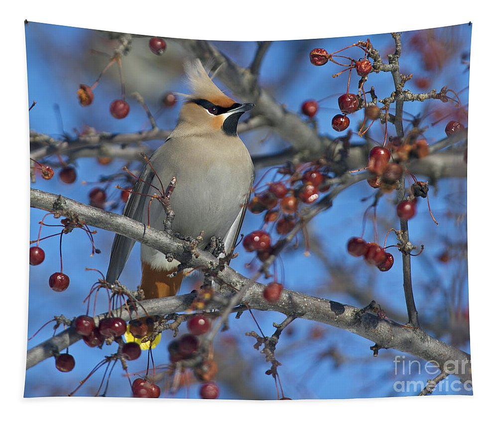 Festblues Tapestry featuring the photograph A Bird For Its Crest.. by Nina Stavlund