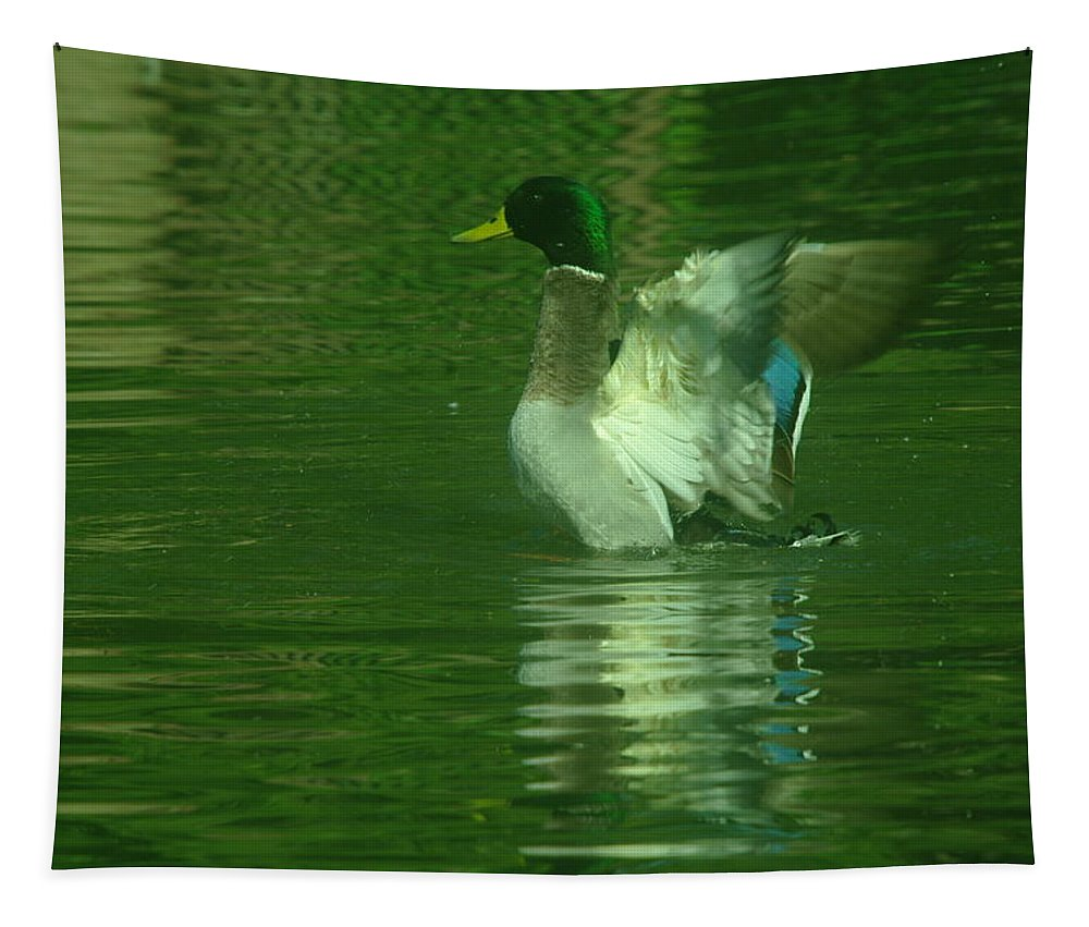 Ducks Tapestry featuring the photograph A Frolicsome Mallard by Jeff Swan