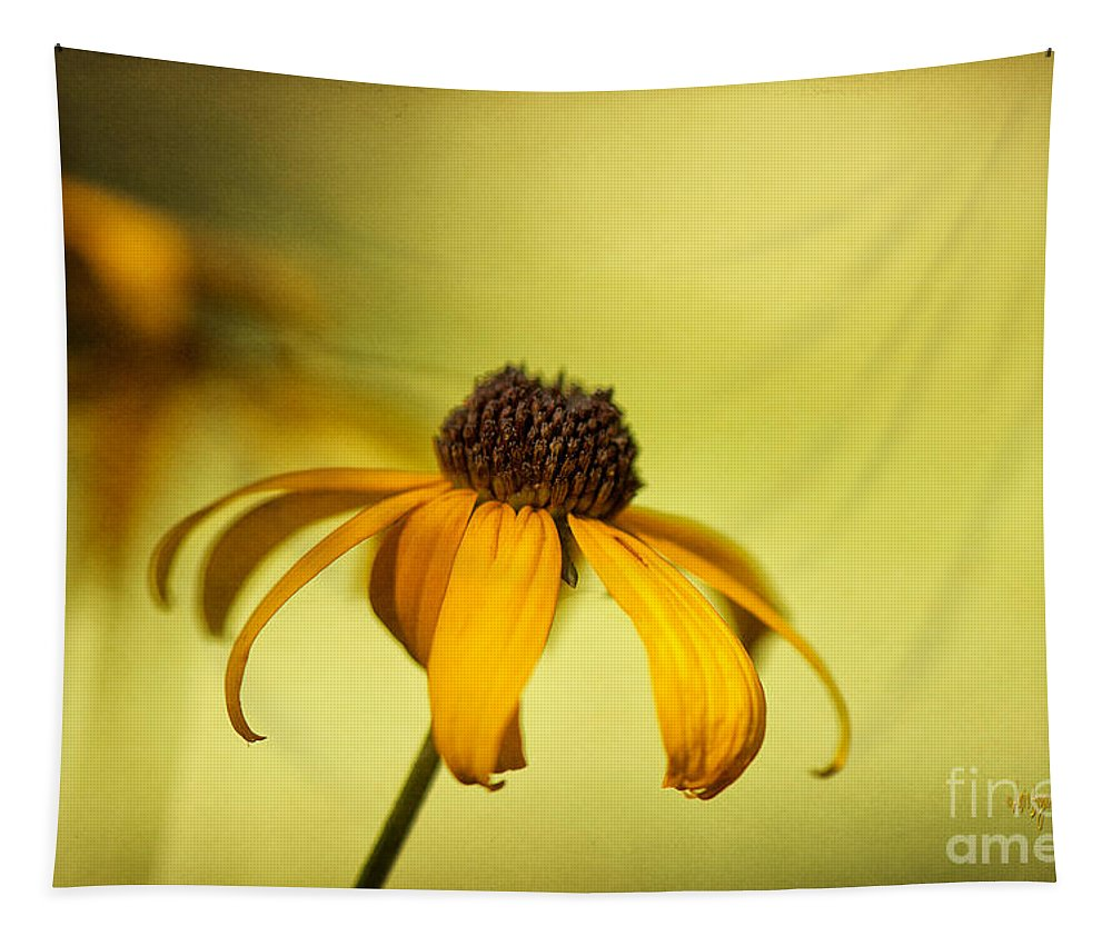 Black Eyed Susan Tapestry featuring the photograph A Gift From August by Lois Bryan