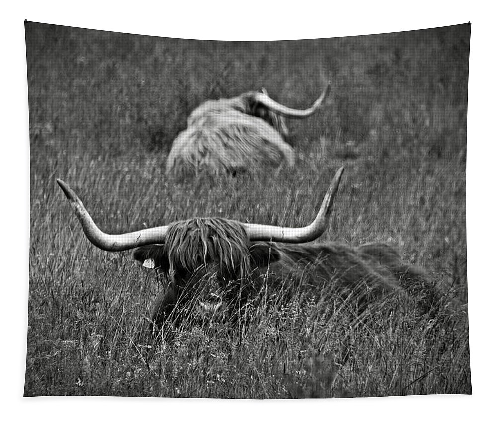 Bw Tapestry featuring the photograph A Highland Cattle In The Scottish Highlands by RicardMN Photography