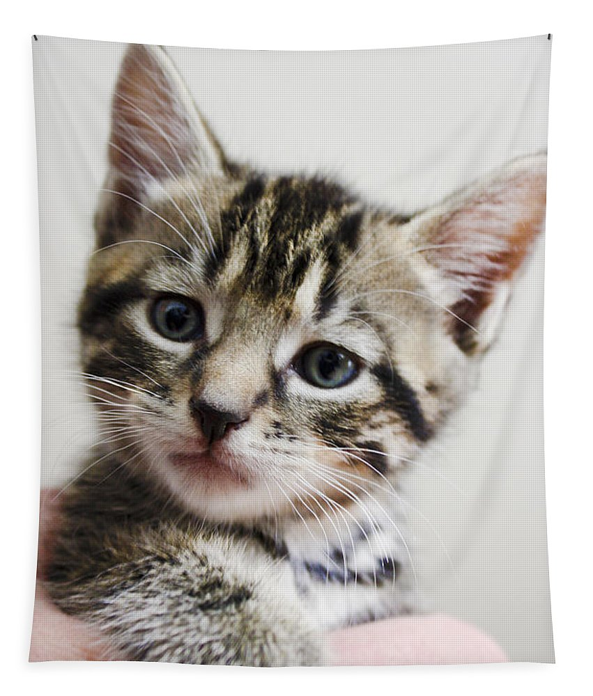 Cat Tapestry featuring the photograph A Kittens Helping Hand by Terri Waters
