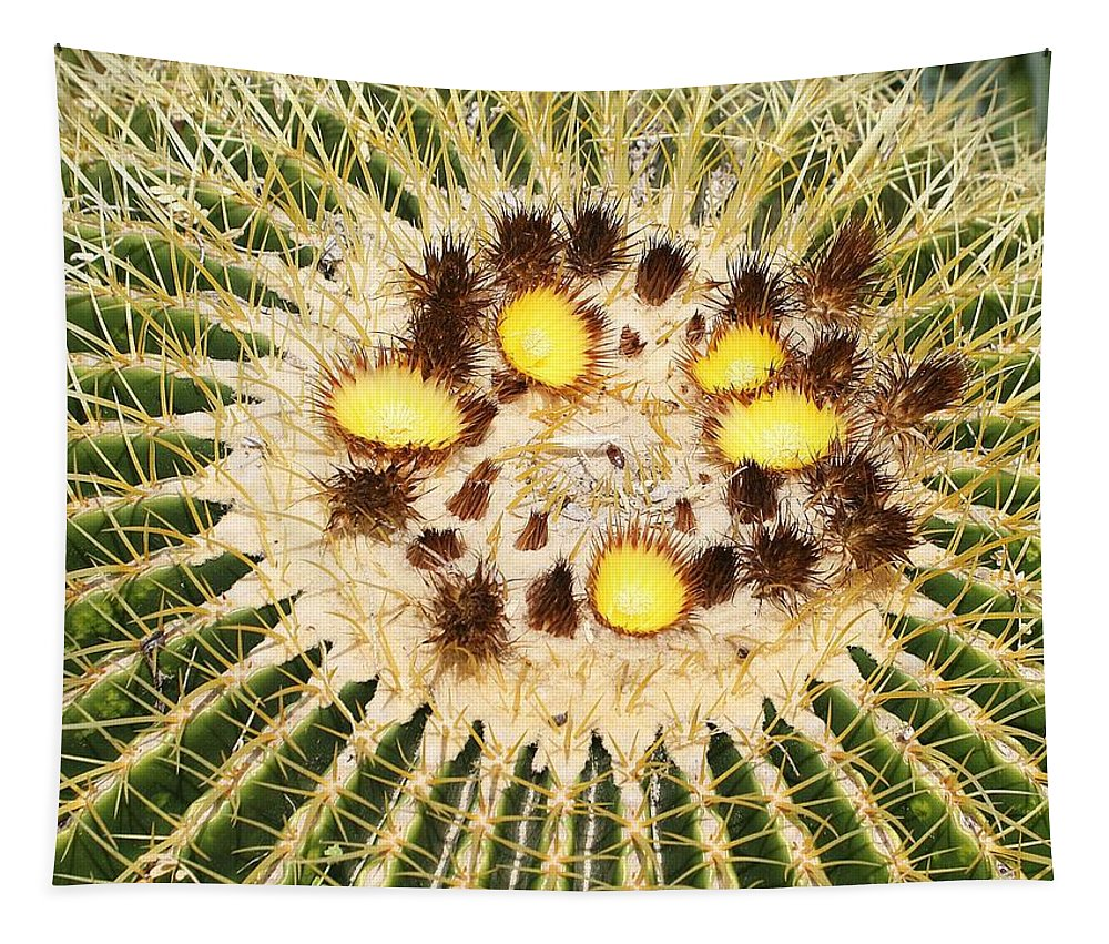 A Mexican Golden Barrel Cactus With Blossoms Tapestry featuring the photograph A Mexican Golden Barrel Cactus With Blossoms by Tom Janca