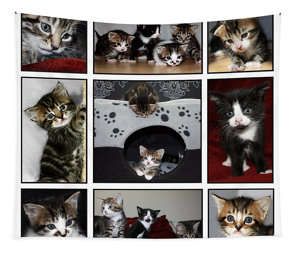 Kittens Tapestry featuring the photograph A Montage Of Kittens by Terri Waters