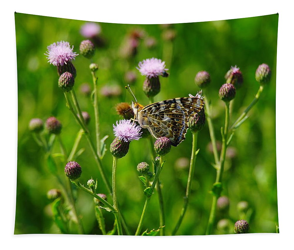 Butterflies. Insects Tapestry featuring the photograph A Painted Lady by Jeff Swan