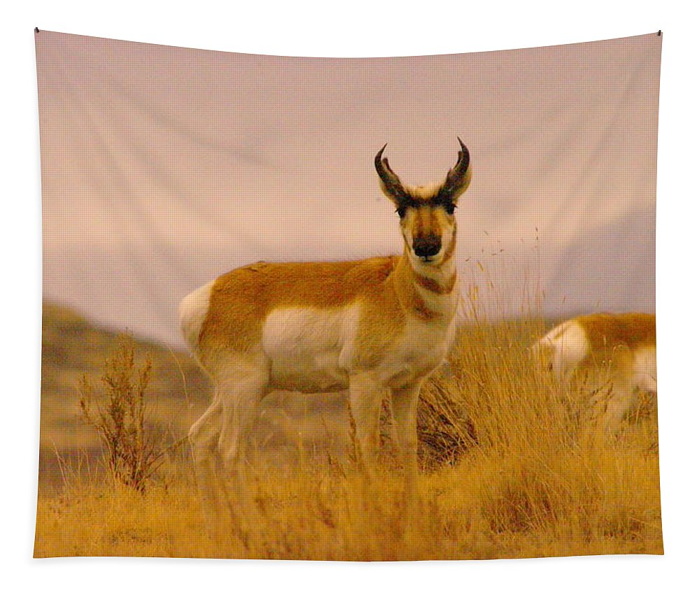 Wildlife Tapestry featuring the photograph A Pronghorn Gazes by Jeff Swan