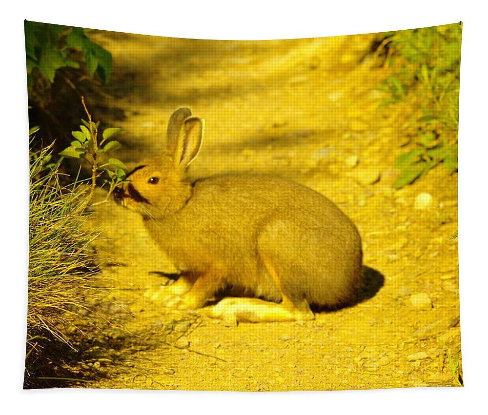 Mammals Tapestry featuring the photograph A Rabbit In My Path by Jeff Swan