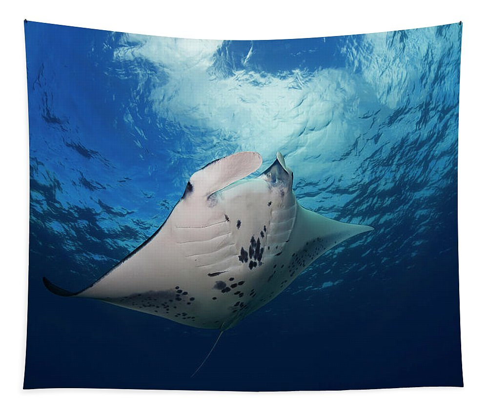 Outdoors Tapestry featuring the photograph A Reef Manta Ray Manta Alfredi by Dave Fleetham