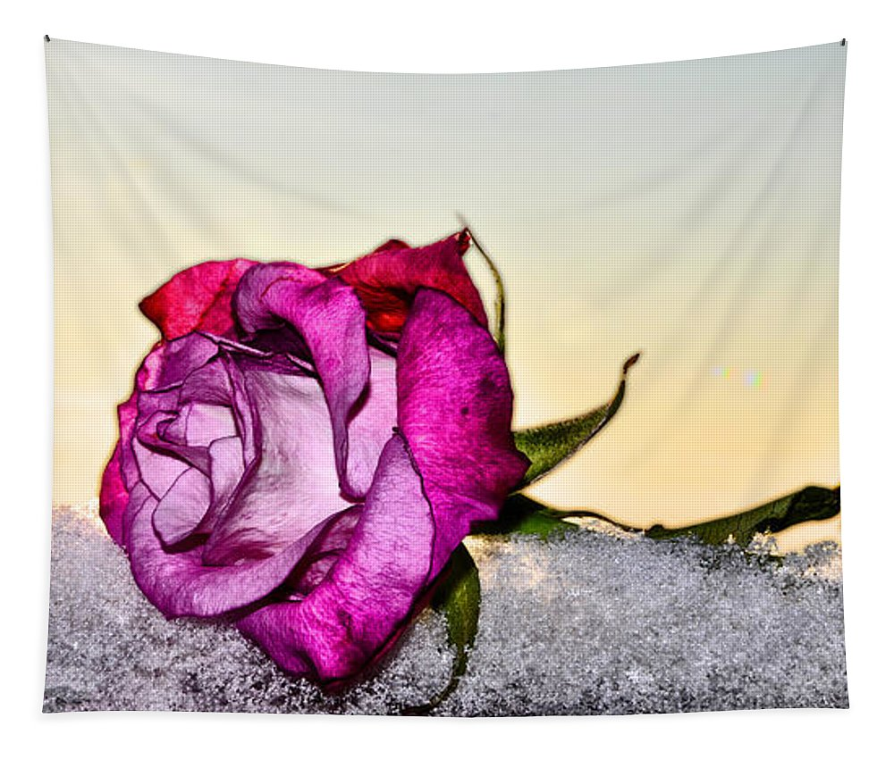 A Rose In Winter Tapestry featuring the photograph A Rose In Winter by Bill Cannon