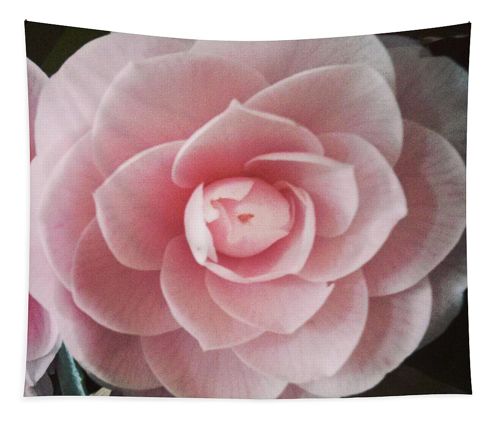 Rose Tapestry featuring the photograph A Rose Is A Rose Is A Rose by Michael Merry