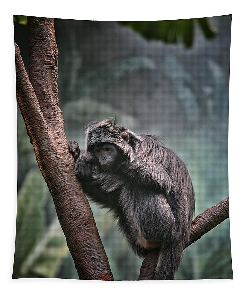 Monkey Tapestry featuring the photograph A Sense Of Sadness by Karol Livote