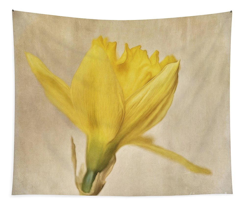 Daffodil Tapestry featuring the photograph A Simple Daffodil by Priska Wettstein