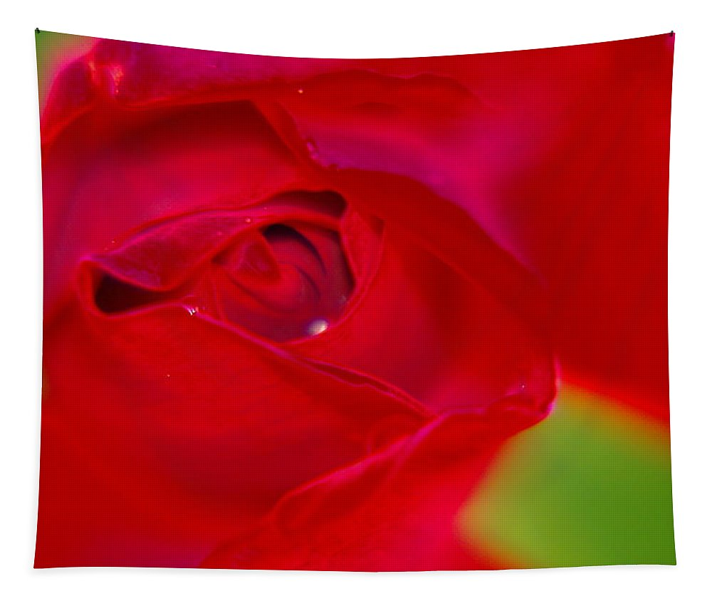Flowers Tapestry featuring the photograph A Soft Wet Rose by Jeff Swan