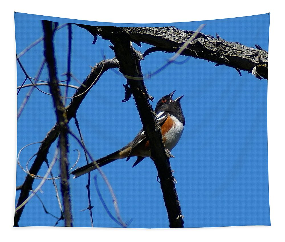 Birds Tapestry featuring the photograph A Spotted Towhee mid-Song by Ben Upham III