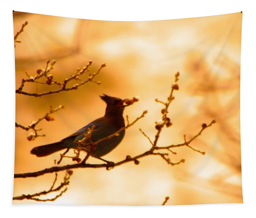 Birds Tapestry featuring the photograph A Stevens Jay Plucks A Berry by Jeff Swan