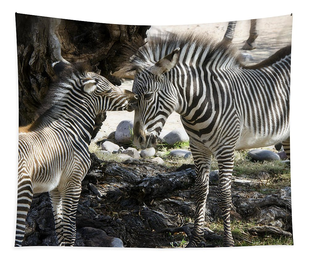 Grevy's Zebra Tapestry featuring the photograph A Tender Moment by Saija Lehtonen