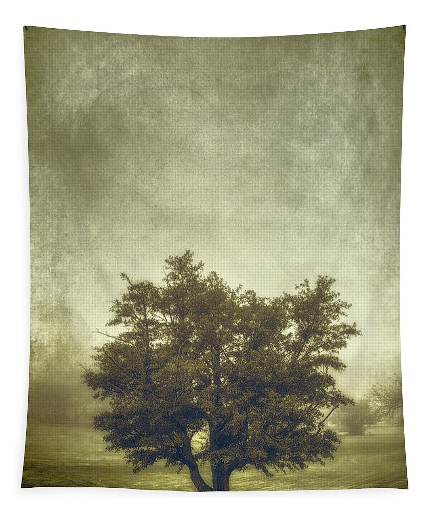 Tree Tapestry featuring the photograph A Tree In The Fog 2 by Scott Norris
