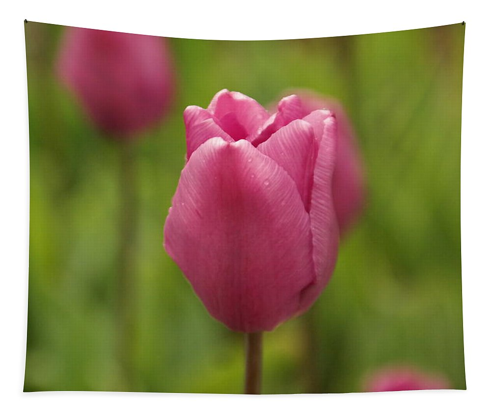 Flowers Tapestry featuring the photograph A Tulip Unfolds by Jeff Swan