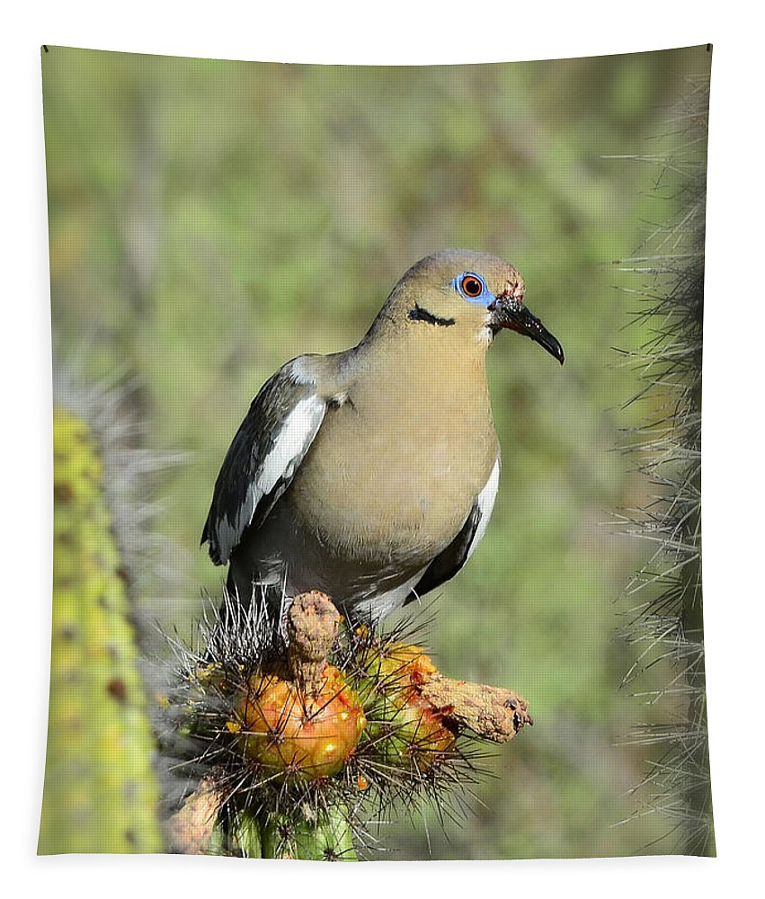 White Winged Dove Tapestry featuring the photograph A White Winged Dove by Saija Lehtonen