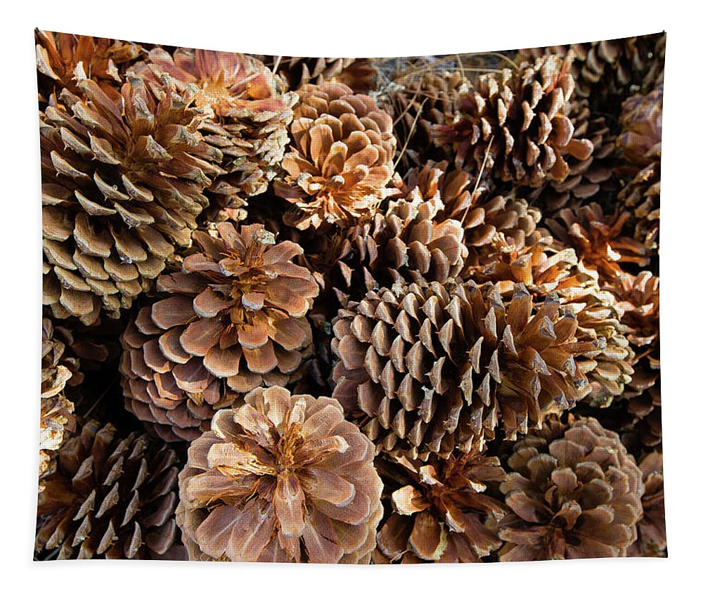 Photography Tapestry featuring the photograph Acorns Growing On Plants by Panoramic Images
