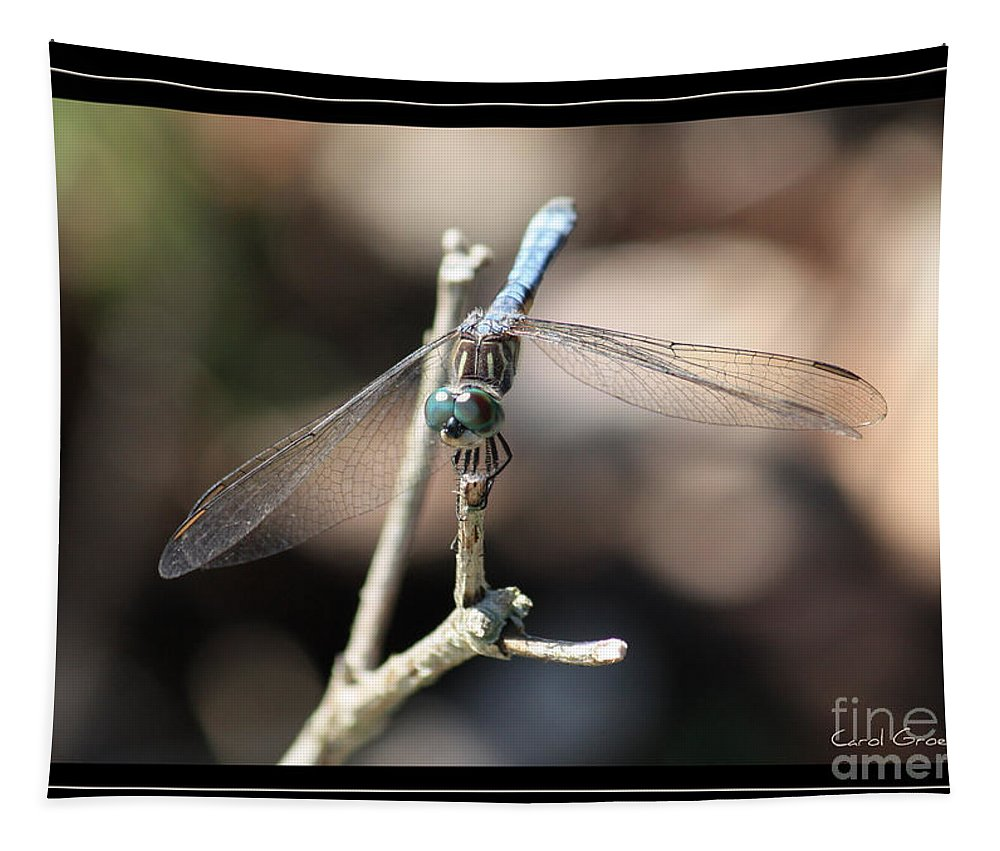 Dragonfly Tapestry featuring the photograph Adorable Dragonfly With Border by Carol Groenen