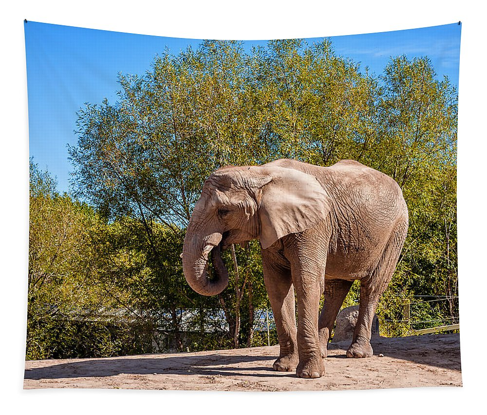 Tapestry featuring the photograph African Elephant 2 by Steve Harrington