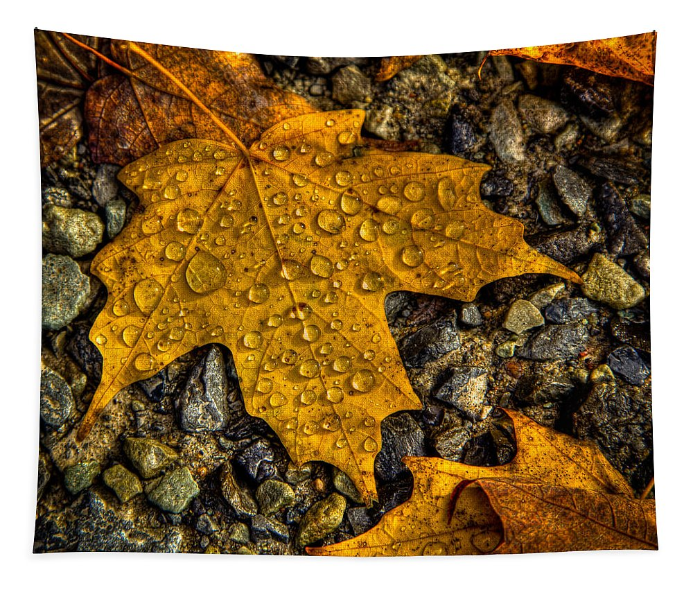 After An Autumn Rain Tapestry featuring the photograph After An Autumn Rain by David Patterson