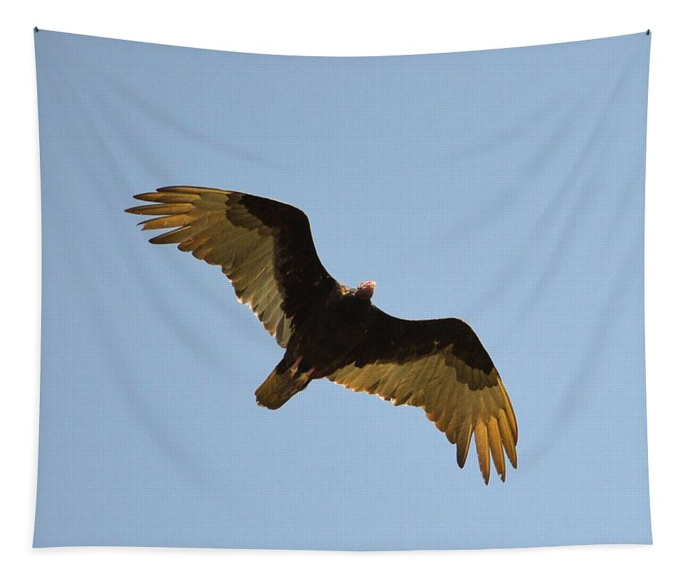 Vulture Tapestry featuring the photograph Against The Wind by Bonfire Photography