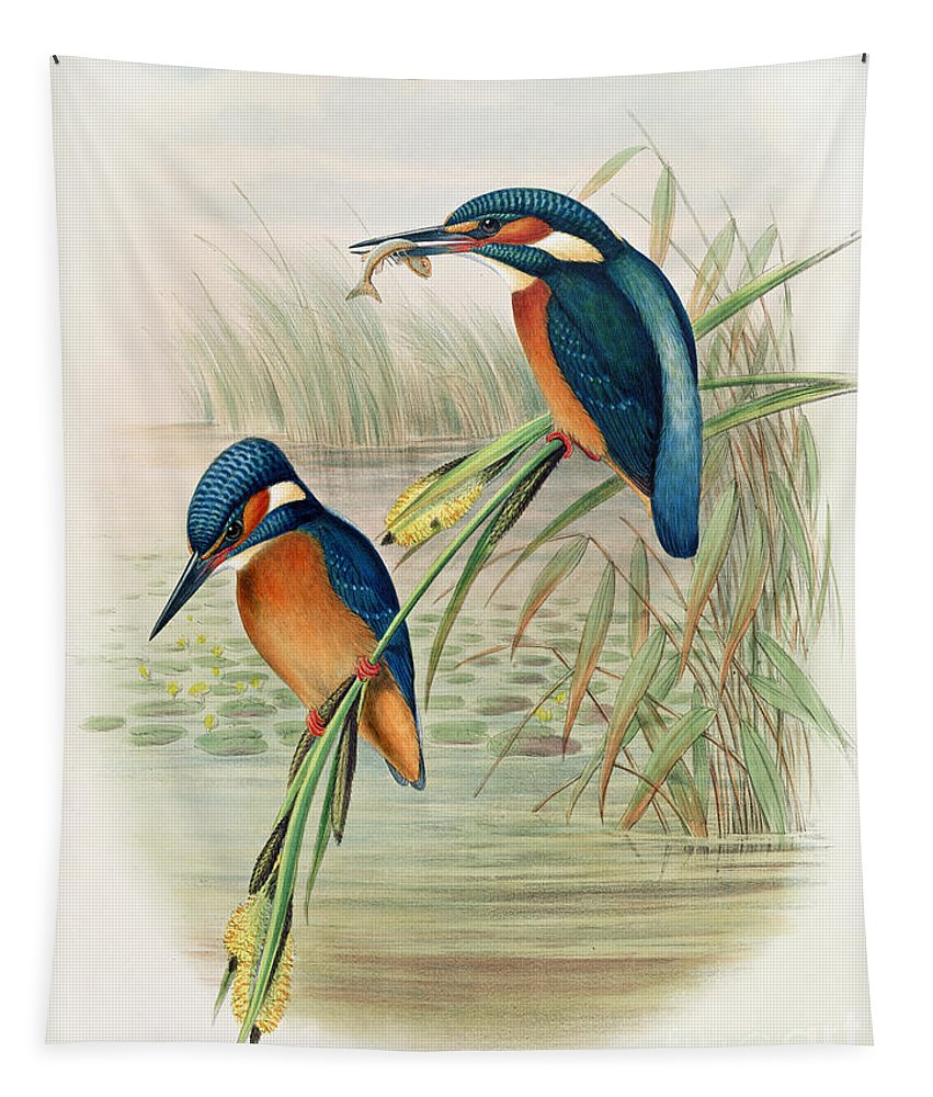 Kingfisher; Birds; Bird; Fish; Colorful; Reeds; River Tapestry featuring the drawing Alcedo Ispida Plate From The Birds Of Great Britain By John Gould by John Gould William Hart