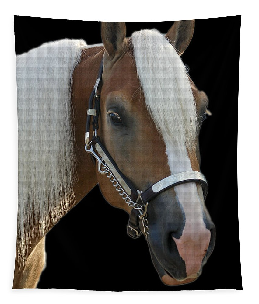 Haflinger Tapestry featuring the photograph All Cleaned Up by Annette Persinger