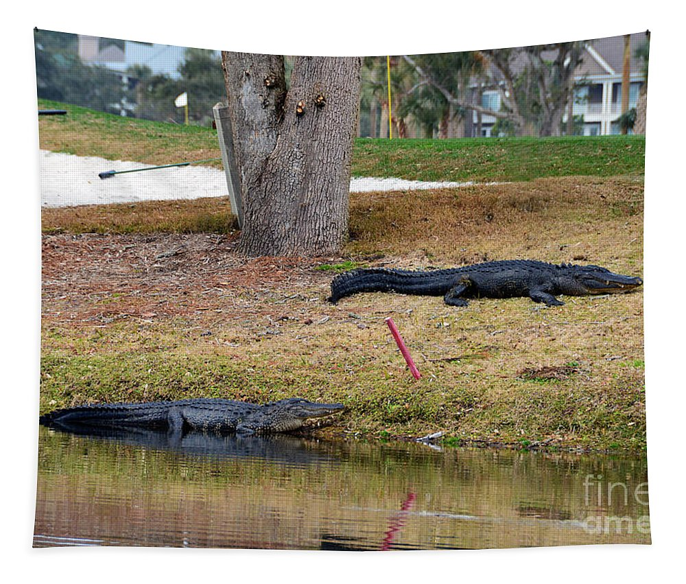 Osprey Point Golf Course Tapestry featuring the photograph Alligator Hazard by Catherine Sherman