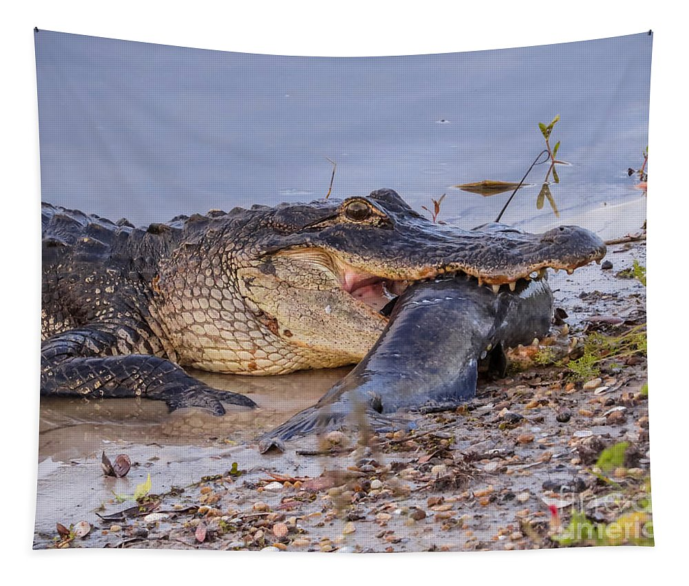 Alligator Tapestry featuring the photograph Alligator With A Fish by Zina Stromberg
