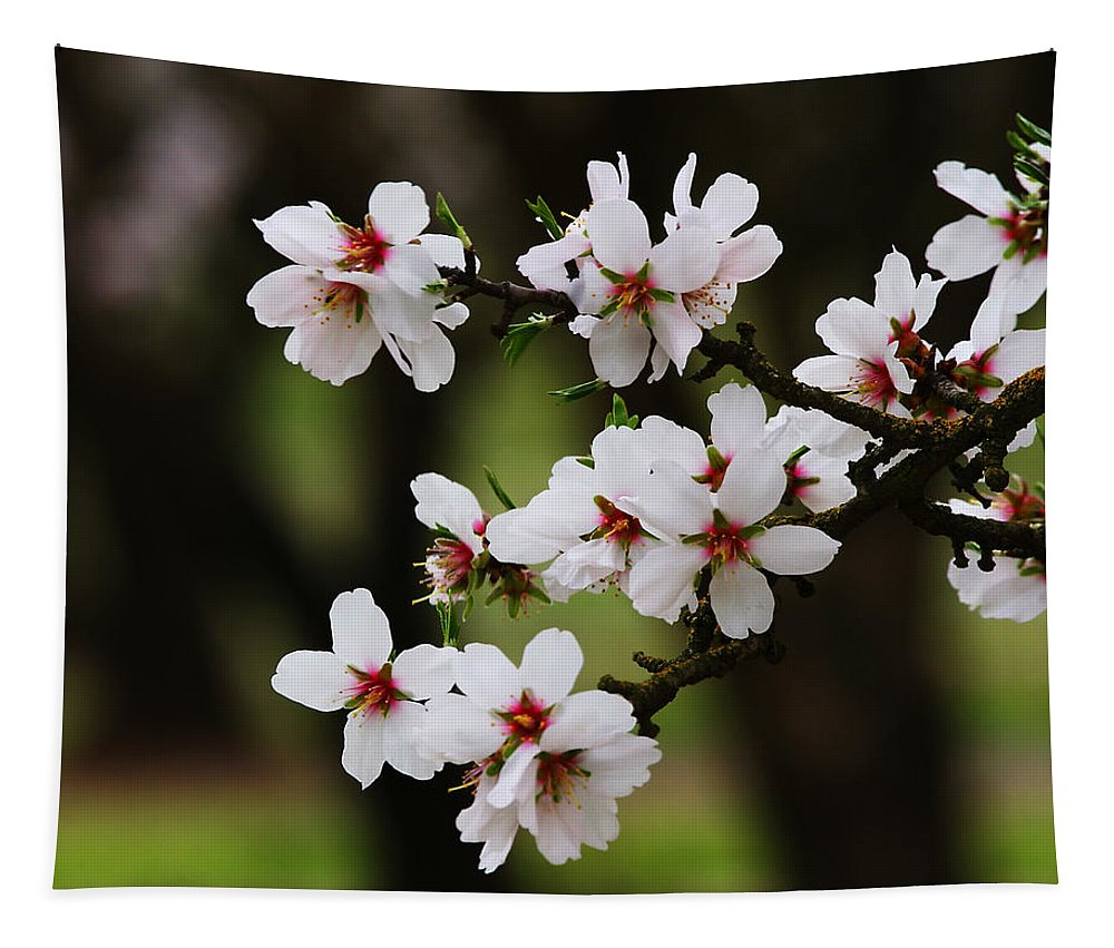 Almond Tapestry featuring the photograph Almond Blossoms by Robert Woodward