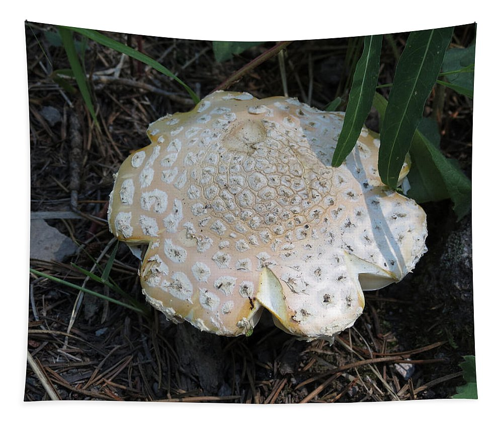 Mushroom Tapestry featuring the photograph Along The Trail by Laurel Powell